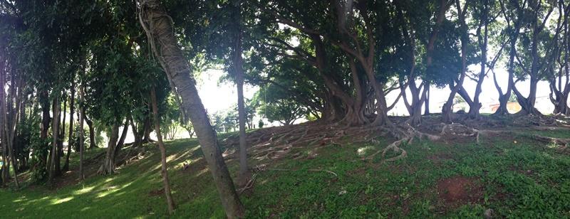 Casarão da Fazenda Jambeiro - Campinas - Jardim do fundo